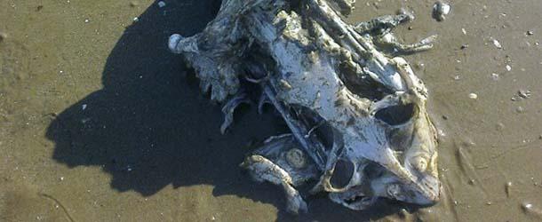 extrana criatura marina inglaterra - Una familia encuentra los restos de una extraña criatura marina en una playa de Inglaterra