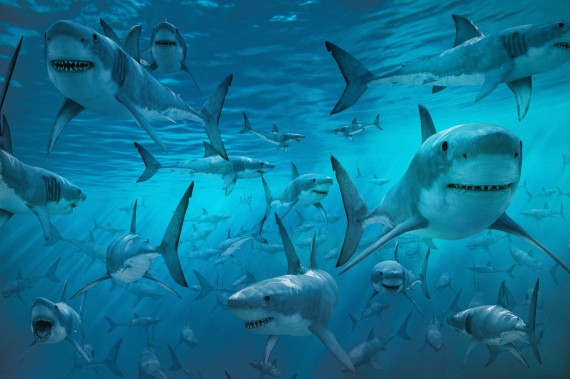 tiburones atolon palmyra - El paraíso maldito del Atolón Palmyra