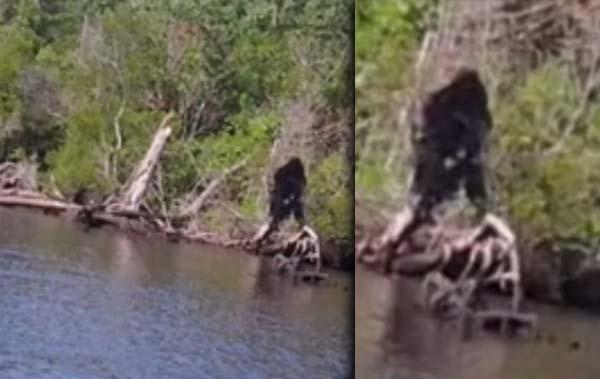 virginia bigfoot rio - Un hombre de Virginia afirma haber fotografiado al Bigfoot cerca de un río