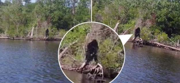 virginia bigfoot - Un hombre de Virginia afirma haber fotografiado al Bigfoot cerca de un río