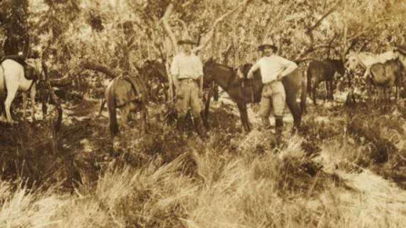 Fawcett expedición