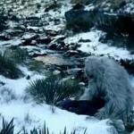 El famoso naturalista Sir David Attenborough decidido a encontrar al Yeti