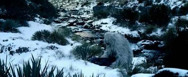 david attenborough yeti - El famoso naturalista Sir David Attenborough decidido a encontrar al Yeti