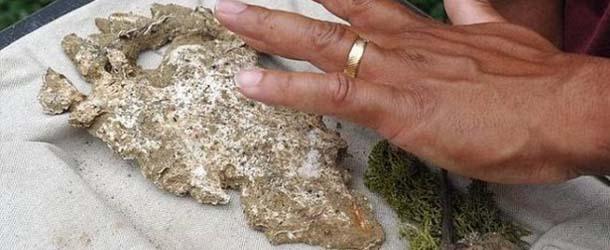 huella misteriosa criatura misisipi - Descubren la huella de una misteriosa criatura en los bosques Misisipi