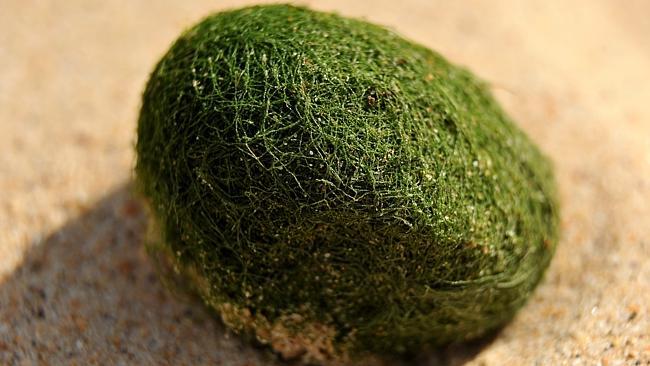 Huevos extraterrestres playa de Sídney