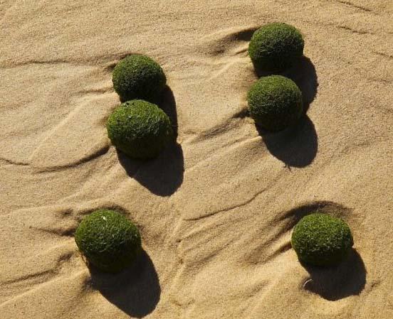 Huevos extraterrestres playa Sídney
