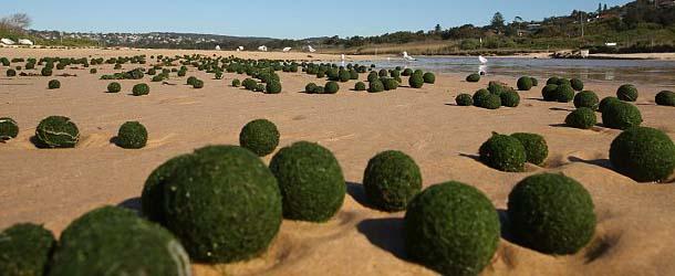 FotoMorfosis Huevos-extraterrestres-sidney
