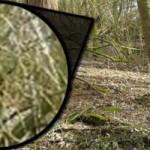Fotografían y graban en vídeo al Bigfoot en el Reino Unido