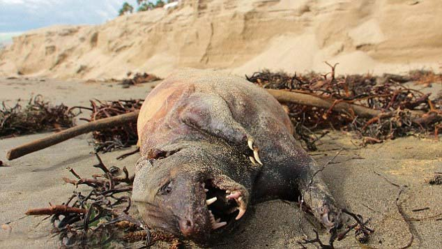 criatura california - Aparece muerta una monstruosa criatura en una playa de California