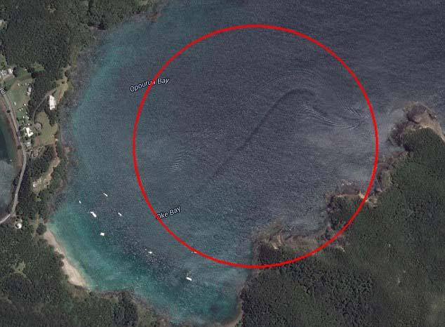 misteriosa criatura costa nueva zelanda - Descubren una misteriosa criatura en la costa de Nueva Zelanda a través de Google Earth