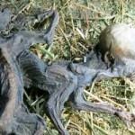 Granjero chileno afirma haber encontrado los restos de dos Chupacabras