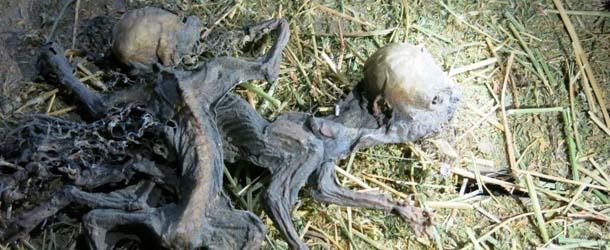 granjero chileno chupacabras - Granjero chileno afirma haber encontrado los restos de dos Chupacabras