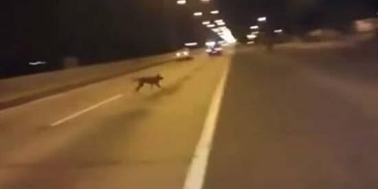 Misterioso perro teletransporta