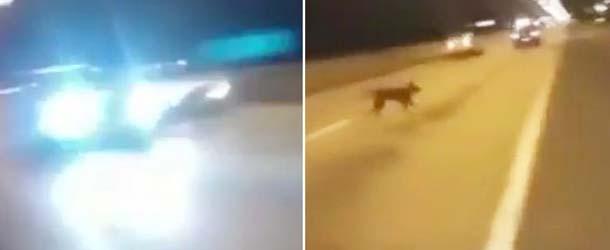 perro teletransporta carrera ilegal coches - Un misterioso perro se teletransporta durante una carrera ilegal de coches