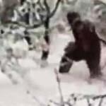 Investigadores graban por primera vez al Yeti en un bosque de Rusia