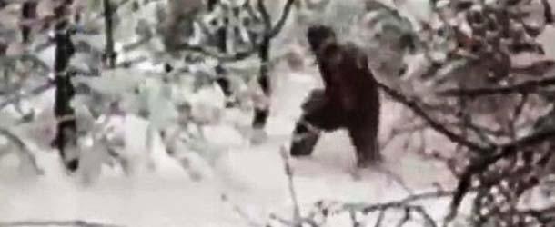yeti bosque rusia - Investigadores graban por primera vez al Yeti en un bosque de Rusia