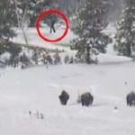 Una cámara graba cuatro Bigfoots en el Parque Nacional de Yellowstone
