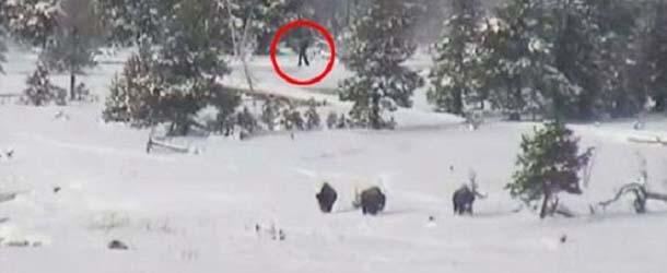 bigfoots parque nacional yellowstone - Una cámara graba cuatro Bigfoots en el Parque Nacional de Yellowstone