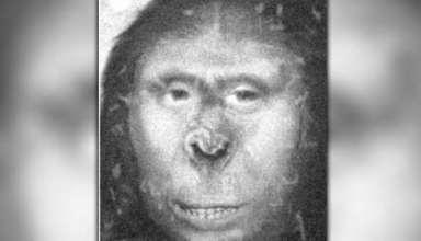 cientifico britanico yeti 384x220 - Científico británico afirma haber descubierto un yeti