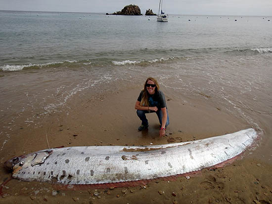 pez remo muerto gran terremoto - Aparece un enorme pez remo muerto en una playa de California, ¿presagio de un gran terremoto?
