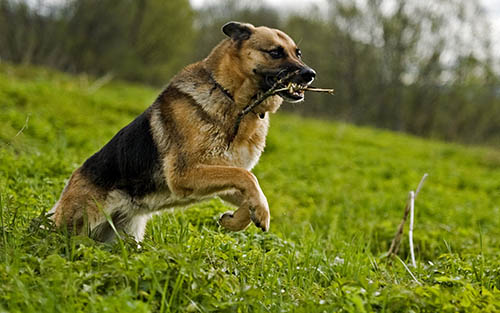 ¿Podemos comunicarnos con nuestras mascotas fallecidas? Podemos-comunicarnos-mascotas-fallecidas