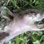 Encuentran una misteriosa criatura muerta en un bosque de Estados Unidos