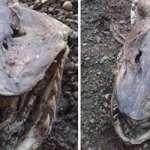 Encuentran el cadáver de una aterradora criatura en un lago de Inglaterra