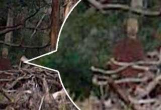 """fantasma bosque suicidios australia 320x220 - Fotografían un fantasma en el """"bosque de los suicidios"""" de Australia"""
