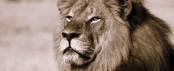 leon cecil - Reconocida psíquica de animales afirma tener mensaje para la humanidad del león Cecil
