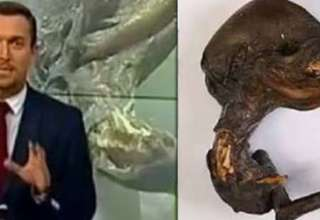 cadaver extraterrestre rusia 320x220 - Científicos desconcertados por el descubrimiento del cadáver de un extraterrestre cerca de una central nuclear en Rusia
