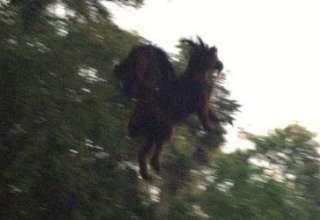 diablo jersey 320x220 - Guardia de seguridad asegura haber fotografiado al mítico diablo de Jersey