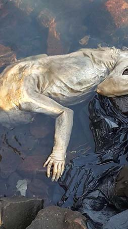 Extraña criatura río de Uruguay