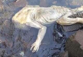 extrana criatura rio uruguay 320x220 - Bomberos encuentran el cuerpo de una extraña criatura en un río de Paraguay