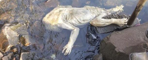 extrana criatura rio uruguay - Bomberos encuentran el cuerpo de una extraña criatura en un río de Paraguay