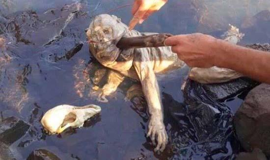extrana criatura uruguay - Bomberos encuentran el cuerpo de una extraña criatura en un río de Paraguay