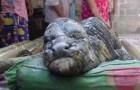 Nace una grotesca criatura en Tailandia que parece un híbrido entre un cocodrilo y un búfalo