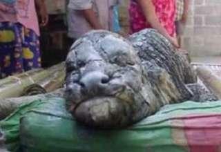 grotesca criatura en tailandia 320x220 - Nace una grotesca criatura en Tailandia que parece un híbrido entre un cocodrilo y un búfalo