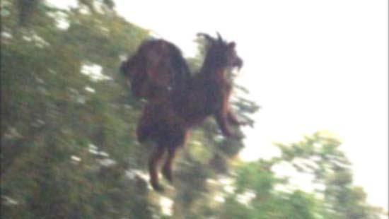mitico diablo jersey - Guardia de seguridad asegura haber fotografiado al mítico diablo de Jersey