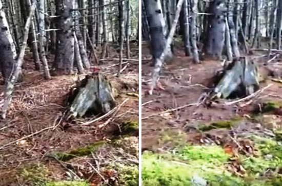 Video demuestra la Tierra vida propia