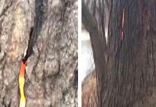 """arbol diabolico ohio 320x220 - Excursionistas descubren un """"árbol diabólico"""" que arde por dentro en Ohio"""
