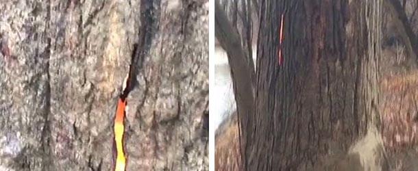 """arbol diabolico ohio - Excursionistas descubren un """"árbol diabólico"""" que arde por dentro en Ohio"""
