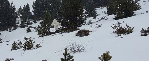 yeti pirineo aragones - Esquiadores aseguran haber visto al Yeti en el Pirineo Aragonés