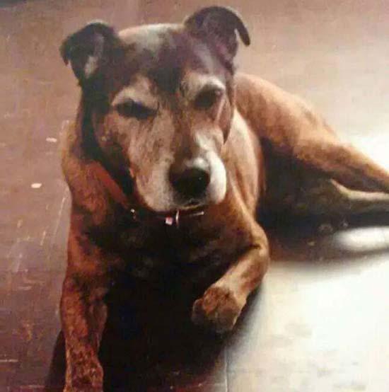 familia fantasma de su perro fallecido - Familia graba en vídeo el fantasma de su perro fallecido
