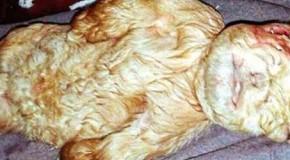 Nace una mítica criatura con cuerpo de cabra y rostro de bebé humano en Malasia