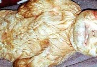 mitica criatura malasia 320x220 - Nace una mítica criatura con cuerpo de cabra y rostro de bebé humano en Malasia