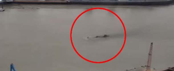 monstruo lago ness rio tamesis - Reaparece el monstruo del Lago Ness en el río Támesis