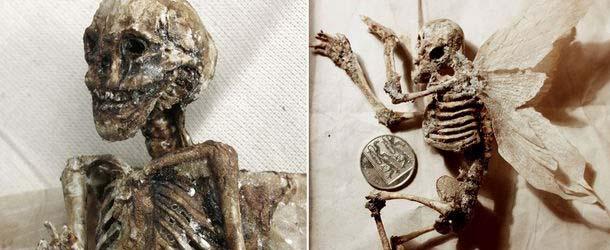 cuerpos criaturas extranas - Encuentran cuerpos de criaturas extrañas en el sótano de una antigua casa de Londres