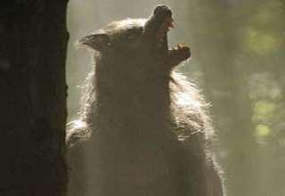 hombre lobo ciudad inglesa 320x220 - Un hombre lobo aterroriza una ciudad inglesa