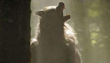 hombre lobo ciudad inglesa 384x220 - Un hombre lobo aterroriza una ciudad inglesa