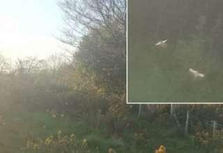 hadas reales gales 320x220 - Rapero fotografía hadas reales en un campo de Gales